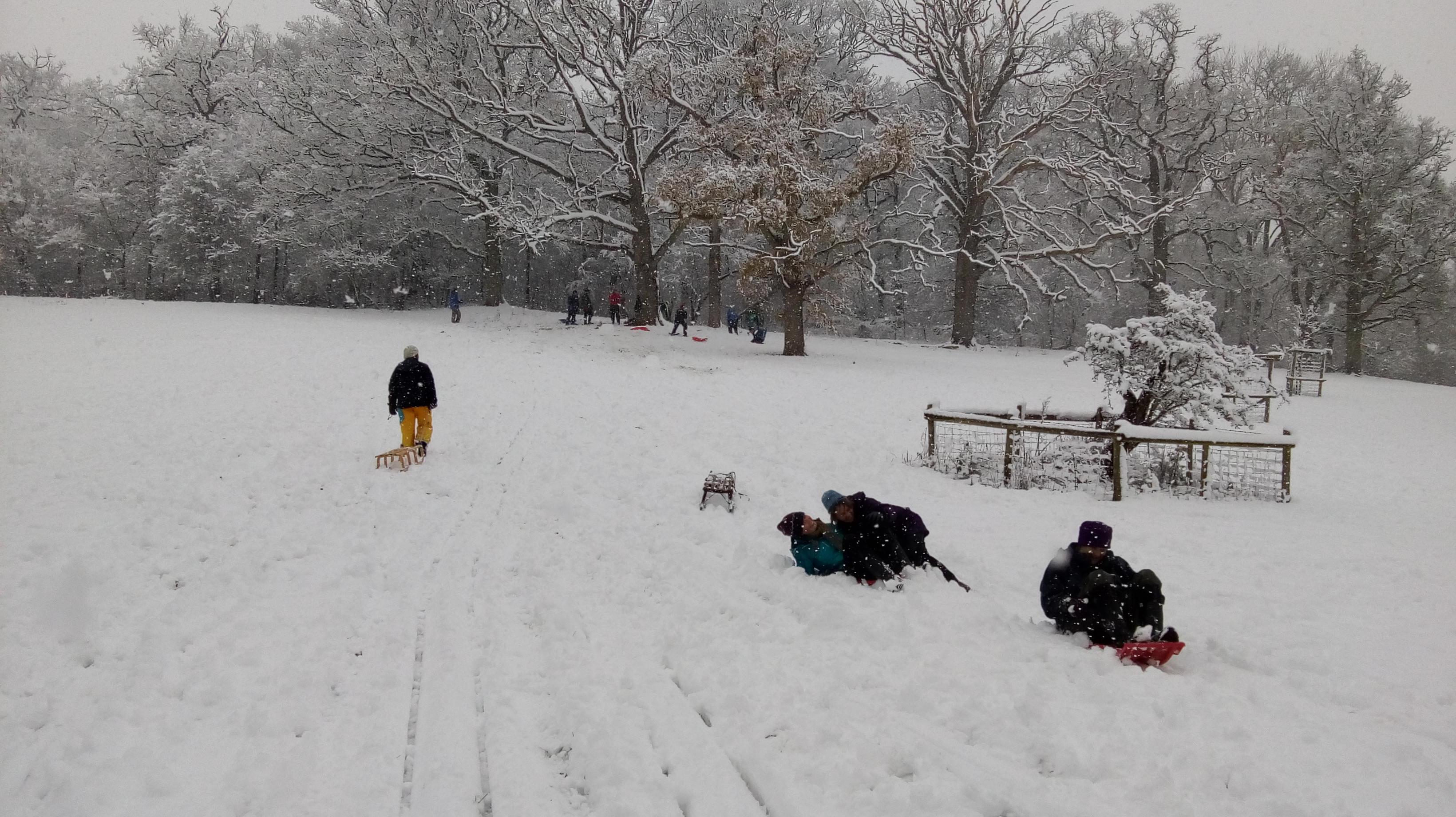 Sledging at the Homend 1