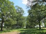 view up oak avenue.JPG