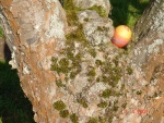 Easter Egg Hunt 2.JPG