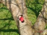 Easter egg Hunt 3.JPG
