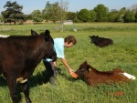 Jenny feeding the cows.JPG